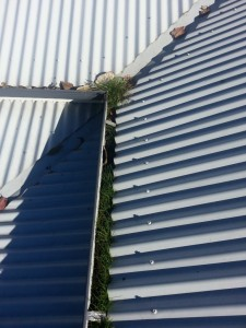 4a - GumLeaf Stainless Steel on a Corrugated Roof - BEFORE